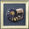 Framed Ammonite Specimen With Hematite Replacement